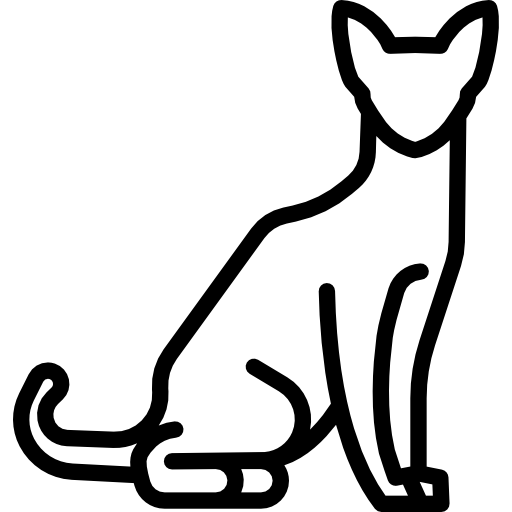 Feline Veterinarian in Dunedin, FL -  Boarding